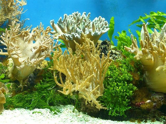 lights for aquarium
