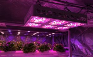 Top 10 LED Light For 4x4 Grow Tent Review
